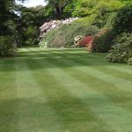 The unsustainable English lawn