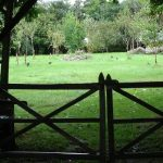why natural burial is better than incineration