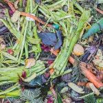 Compost and the garden